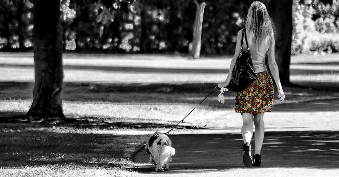 5 segreti che il tuo dog walker non vuole che tu sappia