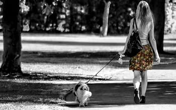 quanto-costa-dog-sitter-roma-sud-eur