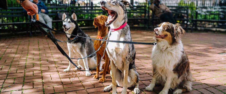 7 ottimi motivi per diventare un dog sitter