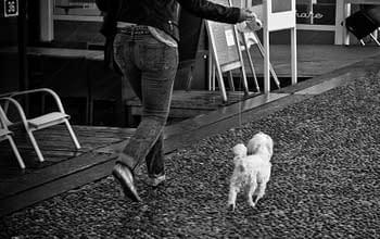 passeggiate con il dog sitter aiutano l'umore dei cani
