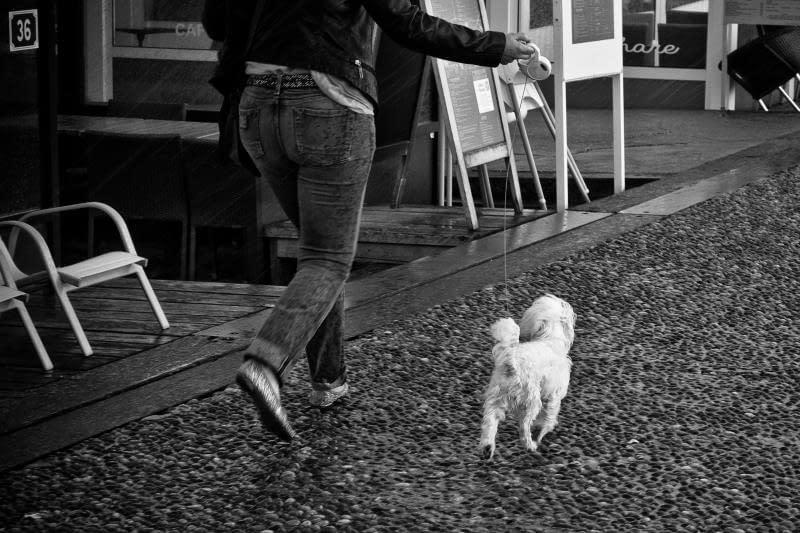 6 vantaggi scientifici della passeggiata: il tuo cane ti ringrazierà
