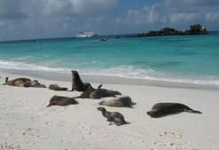 galapagos-island-beaches-gardner-bay-beach