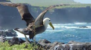 51-Mike-Keenan-albatross